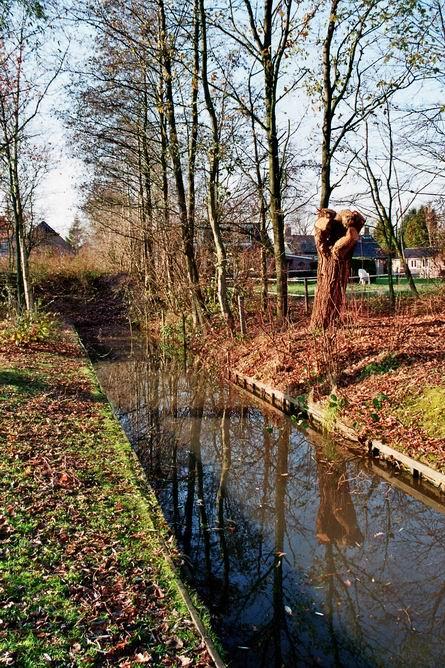 Resize_sloot_met_bomen_hertenkamp