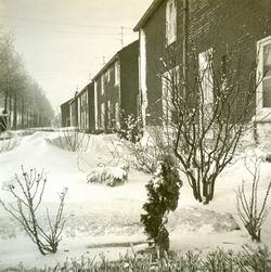 Resize_of_sneeuwmidwoldaniesoordl_2