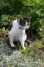 Resize_of_poes_voortuin_verbree_020