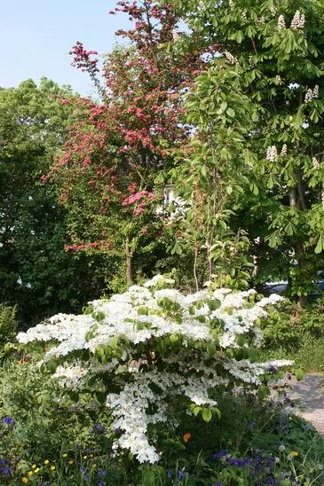 Resize_of_bloemenpracht_mei_2008