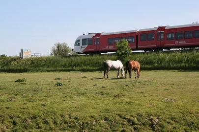 Resize_of_paarden_en_spurt_24052008