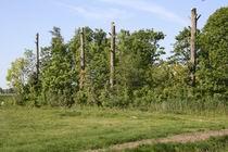 Resize_of_bomen_als_staken_bij_mokk