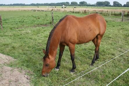Resize_of_paard_2_bij_zwama_0608200