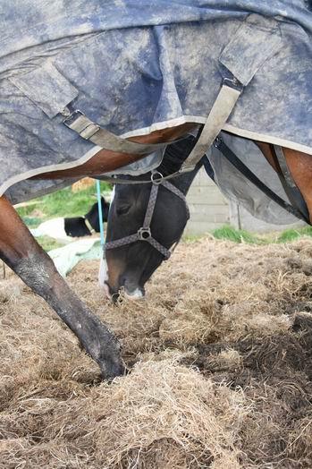 Resize_of_paarden_bij_zwama_6_03102