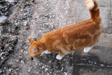 Kattenstront In Tuin : Wat te doen tegen kattenpoep in de tuin kattenpoep in de tuin