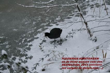 Resize of Meerkoet 02 17122010 + wens
