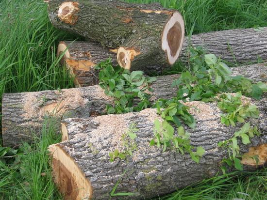 De aanpassingen in het landschap hebben flink wat bomen de kop (en de rest...) gekost! Herplanting verplicht?