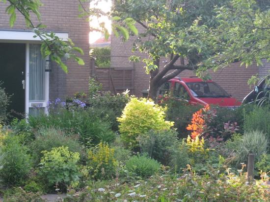 De voortuin bij onze huurwoning aan de Verlengde Oosterweg. Even zet het licht twee planten in het zonnetje.... De rest van de foto is flets, er zit weinig leven in....