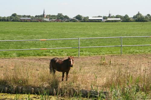 Deze pony heeft wel een heel schraal stukje grasland tot zijn beschikking.....