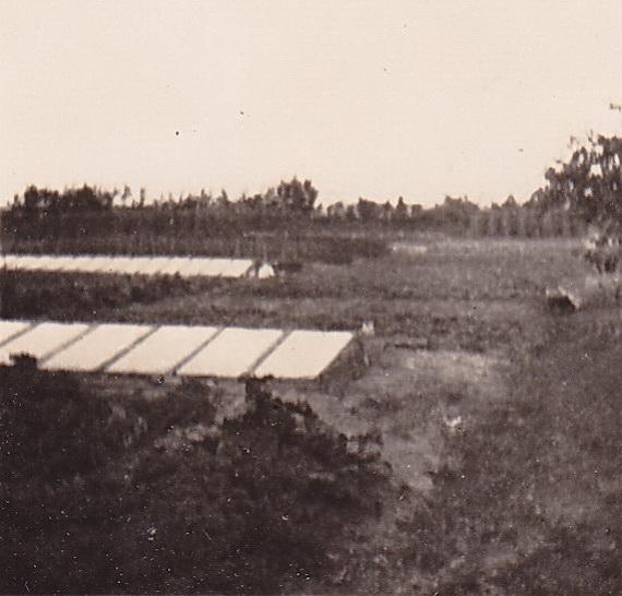 Doorkijk op de tuin vanaf erf Bosscher, september '48