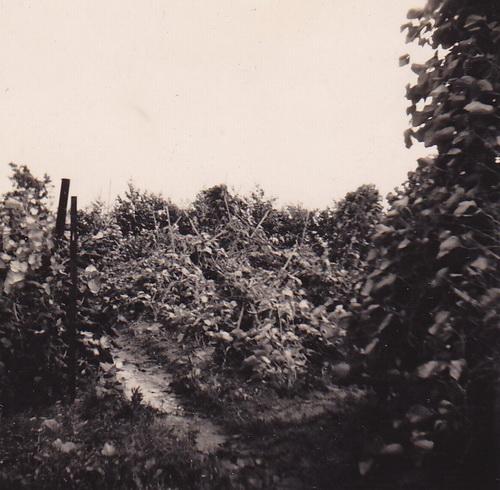 2014-12-11 17-38-36 crop verkl_3947