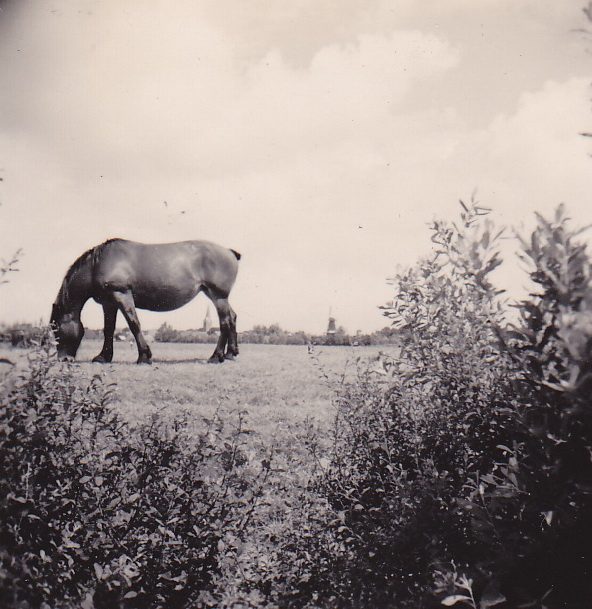 LJL Doorkijk op Noordhorn vanaf Nieuwe Kanaal 1949