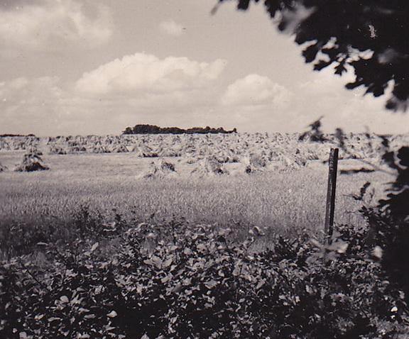 LJL Omgeving Exloo 02 1949