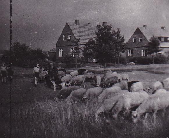 LJL Omgeving Exloo 1949